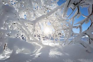 Schnee geÄst