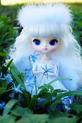 Dal Milch (Blue faerie) Tags: pullip dall doll dollcollector