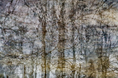 Puddles (Multiple Exposure) 89 (pni) Tags: tree reflection ice water puddle multiexposure multipleexposure tripleexposure lapinlahti lappviken helsinki helsingfors finland suomi pekkanikrus skrubu pni
