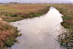 Marshland (Jackobo) Tags: plants water stream greece brook marshland loutro amfilochia arapis krikellos αμφιλοχία λουτρό αράπησ κρίκελλοσ φυτά έλοσ νερό ρυάκι χείμαρροσ