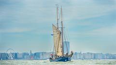 _DSC8630 (L.Janssens Photography) Tags: nikon mast oostende gallant schip oostendevooranker havenoostende tribe98 lorenzojanssens lorre98
