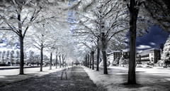 Hampton Court Gardens (Gareth L Evans) Tags: infrared hamptoncourt skeletor spook hss