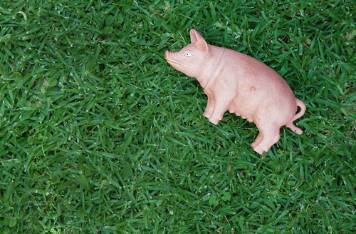 I lost my pig