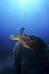 2012 10 METTRA OCEAN INDIEN 2356