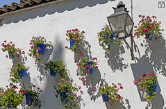 Patio, Crdoba (Sr. Fernandez) Tags: flowers blue espaa white flores blanco azul canon eos spain europa europe shadows courtyard andalucia patio pot 5d andalusia crdoba sombras mkii tiesto maceta 5dmarkii