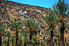 Plenty of Palms (Art4TheGlryOfGod) Tags: california palms palmtrees sandiegocounty