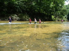 "Sipsey Fork 7-17-13 013 • <a style=""font-size:0.8em;"" href=""http://www.flickr.com/photos/61177391@N02/9314099053/"" target=""_blank"">View on Flickr</a>"