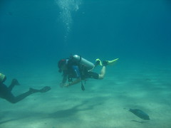 IMG_0504 (acmt2001) Tags: sea fish coral underwater  redsea scuba diving reef eilat aquasport