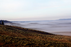 Early Morning Fog in Hayden (breakfast_pizzas) Tags: morning fog early nationalpark hills valley yellowstonenationalpark yellowstone hayden rolling rollinghills haydenvalley earlymorningfoginhayden