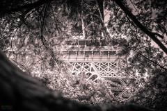 Struts and Needles (Fairy_Nuff (new website - piczology.com!)) Tags: paris tower metal tour eiffel evergreen needles struts effel welshot
