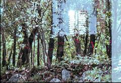 over nature (peiroleo) Tags: color fuji doubleexposure multipleexposure nikkormat ft3
