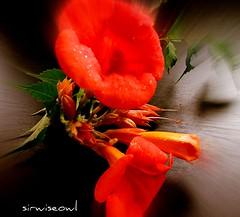Flower Zoom!