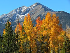 Rocky Mountain Autumn (Sandra Leidholdt) Tags: autumn color fall colors leaves trees branches sandraleidholdt foliage usa america american us autumncolours fallcolours frisco rockymountainhigh snowcoveredpeaks summitcounty tenmilerange peakone paysage landscape mountainside mountainpeak ridge mountainridge tree mountain rockymountains colorado
