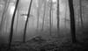 (Korim S. Loup) Tags: blackandwhite bw forest wald virela gardela virela2 gardela2 virela3 gardela3 virela4 virela5 virela6 virela7 gardela4 gardela5 gardela6 gardela7 gardela8 gardela9 gardela10