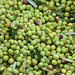 2013 Jordan Olive Harvest 007