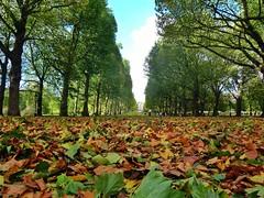 First Fall (Douguerreotype) Tags: park city uk autumn trees england urban london fall nature leaves lumix leaf britain panasonic foliage greenpark gb avenue