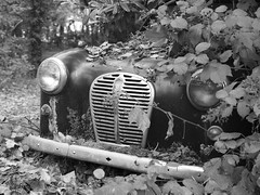 Austin in the undergrowth (Hammerhead27) Tags: auto uk light blackandwhite plant tree abandoned overgrown leaves car trash austin junk decay wing monotone voiture bumper grille wreck bonnet scrap
