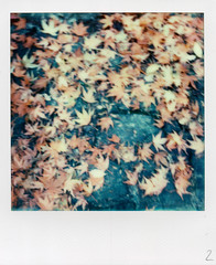 The autumn carpet (Skink74) Tags: uk autumn red england orange brown fall film leaves yellow stone garden polaroid sx70 gold maple path hampshire instant hursley impossible sx70alpha1se impossibleproject px680 px680colorshade