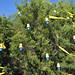 Trees_of_Loop_360_2013_112