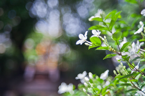 white flowers on bokeh background