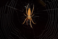 Spider web (mcvmjr1971) Tags: macro brasil sopaulo nikond50