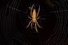 Spider web (mcvmjr1971) Tags: macro brasil sãopaulo nikond50