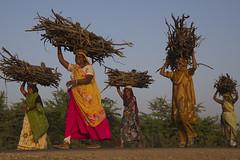 Indian life (Bertrand Linet) Tags: india bertrandlinet