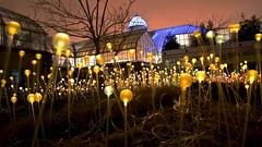 Yellow Lights (tim.perdue) Tags: park light columbus ohio field yellow night garden dark botanical lights franklin artist bruce conservatory installation munro