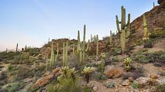 Sonoran Desert Landscape (BongoInc) Tags: arizona cactus southwest landscape desert tucson saguaro sonorandesert desertlandscape tucsonmountainpark