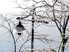 Ice Lamp (Elise Creations & Passions) Tags: winter cold ice canon icy graysky icicles greysky icelamp snowybranches iceonbranches icecoveredbranches blacklamppost essexjctvermont winter2013 elisecreationspassionsphotography elisemarksphotography lanterndrippingwithice iceonalamp icecoveredlamp