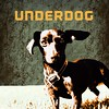 "UNDERDOG • <a style=""font-size:0.8em;"" href=""https://www.flickr.com/photos/32369419@N00/12410991855/"" target=""_blank"">View on Flickr</a>"