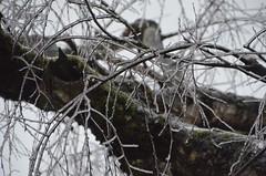 "DSC_0072 (Lynette_1_2_3) Tags: ""cold weather"" ""snow"" ""wind"" ""february ""©portlandoregondailyphoto 2014"""