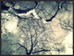Platanes bi centenaires (Giulia_) Tags: paris france plante noiretblanc jardin ciel arbre parc branche platanes flickrandroidapp:filter=nyc fv14 luxemboirg