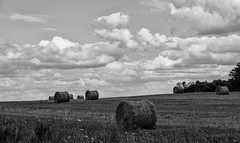 IMG_7547SP (VNR Photography) Tags: trees summer blackandwhite ontario canada field clouds canon afternoon farm georgetown hay haybale canoneos5dmarkii andrevonnickisch