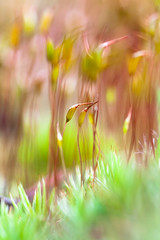 green (dzroth) Tags: macro green nature moss sporophyte tinylandscapes