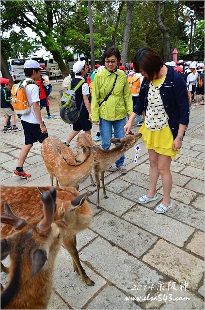2014京阪神 DAY4