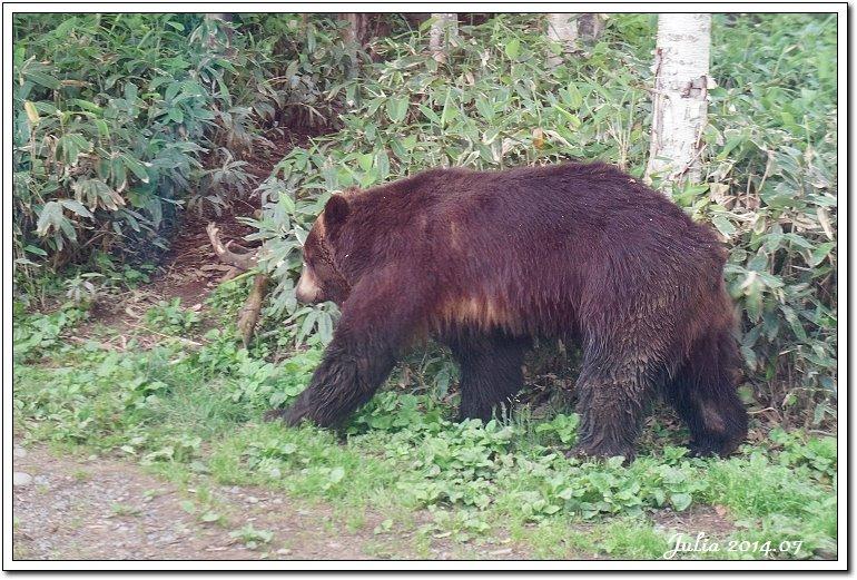 熊牧場 (22)