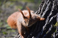 How are you ? (eowina) Tags: squirrels park animals pets portrait nature spring