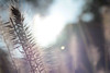 IMG_0650 (inQntrol_life) Tags: flower nature wildlife cat rose colour canon canoneos600d 600d nikon nightlife streetphotography street fire bodensee lakeconstance germany macro danbo toy water waterdrop