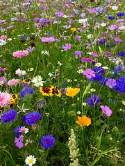 tribute (judydeanclasen) Tags: forlondonmarch22nd2017 tribute wildflowers