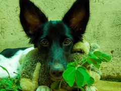 Dog and Rabbit (Felippe Frigo) Tags: dog cachorro coelho rabbit pelucia trevo lucky sorte planta verde green nikon alegre brasil brazil espirito santo universidade federal do black white bw