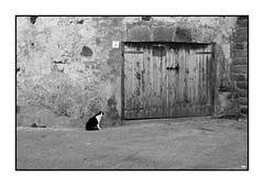 Cat (Franco & Lia) Tags: alghero sardegna sardinia street photographiederue fotografiadistrada biancoenero noiretblanc blackandwhite gatto muraglia bastioni porto cat harbor ramparts