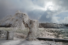 freezing rapids (Christian Collins) Tags: newyork ny niagara falls tree rime mist frozen cold chilly rapids river rio trees fence snow nieve log frosty canoneos5dmarkiv