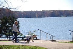 pets dogs leash walk
