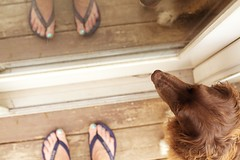 In and out (BeckySue) Tags: door stella dog feet flipflops fromwhereistand