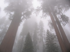 Sequoia National Park (U.S. Department of the Interior) Tags: park national sequoia sequoias
