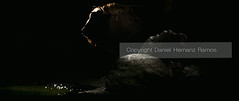 BULL Profile (Daniel Hernanz Ramos) Tags: animal bull americanbison bisonbison bisonte specanimal artisticpictures animalsphoto artisticanimalpictures allrightsreservedinallmypicturesdontusewithoutmypermission copyrightdanihernanz fotografodeanimalsdanihernanz animaldetailpictures animalsfacetoface