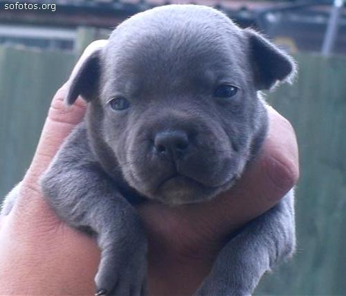 Filhotes de cachorros 17