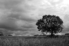 Tree Under Sky.