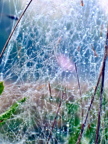 Barn Beyond Webs